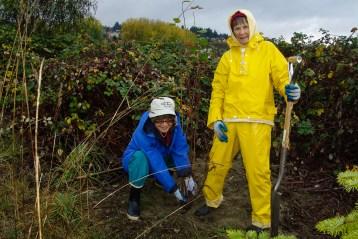 friends volunteer planting shrubs even in the rain