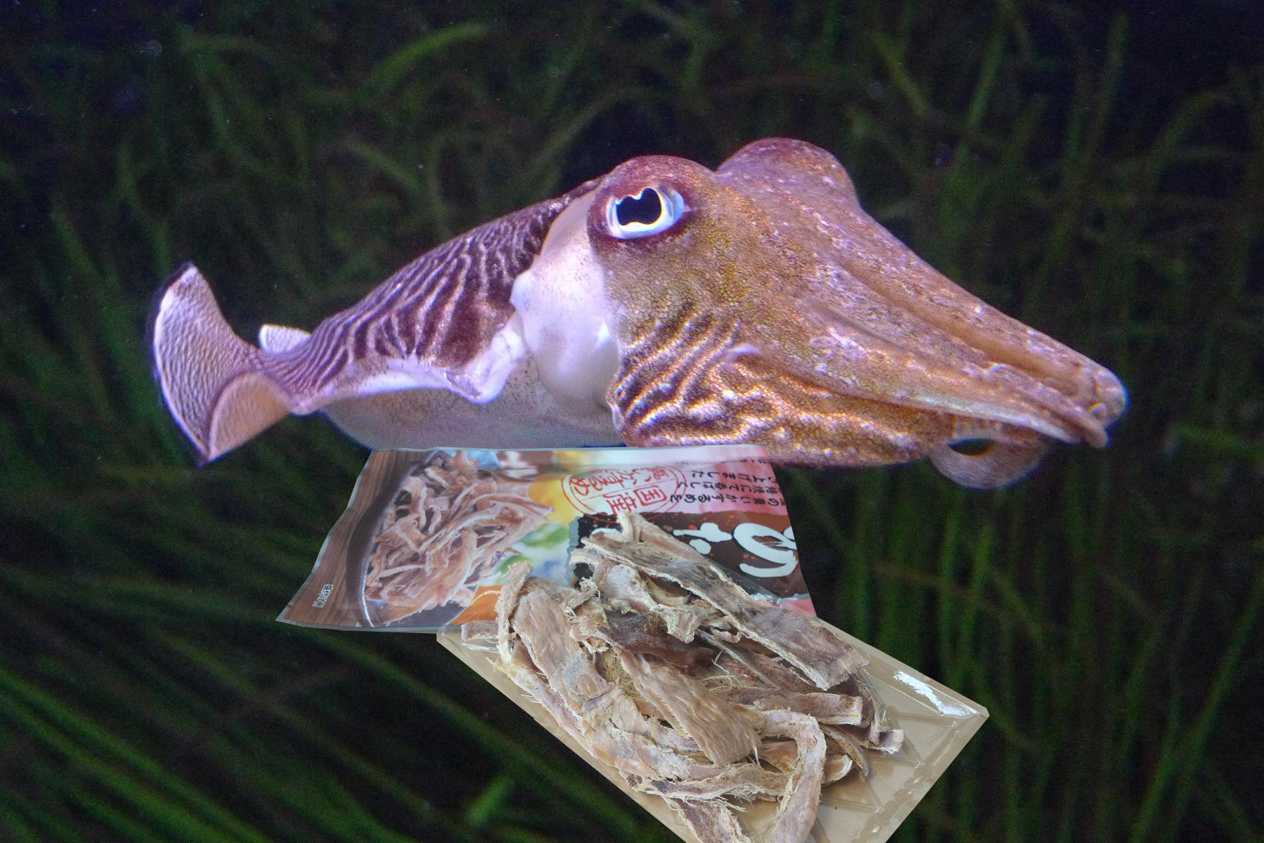cuttlefish_background