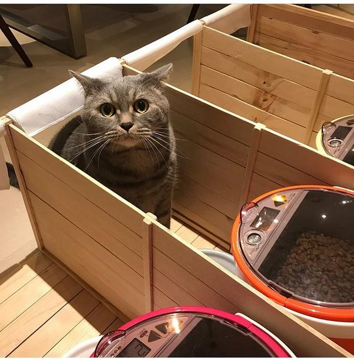 fat-dad-cat-food-partitions-meatball-hong-kong-5