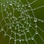 Macropopname van dauwdruppels op een spinnenweb tegen een egaal groene achtergrond. De scherpe dauwdruppels op de spinragdraden lijken wel een parelsnoer.