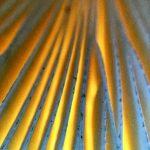Detailopname van de sporenplaatjes van een paddenstoel, die beeldvullend gefotografeerd zijn. De plaatjes zijn wit van kleur, maar tussen de sporenplaatjes door zie je een gelig licht van de zon die doorheen de hoed van de paddenstoel schijnt.