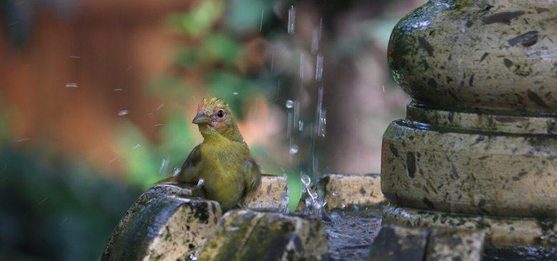 El agua dormida de la fuente, Jerónimo Alayón