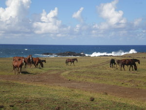 Wild Horses on Easter Island (2/3)