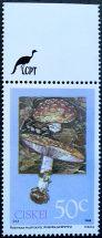 Ciskei, Poisonous mushrooms, Amanita pantherita, 1988