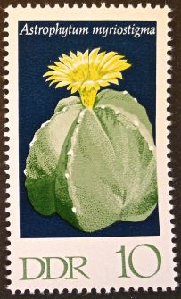 East Germany - flowers - Astrophytum myriostigma