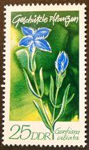 East Germany - flowers - Gentiana ciliata