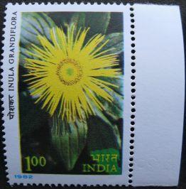India, Inula grandiflora, 1982