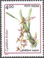 India, orchids, Cymbidium bicolor, 1991