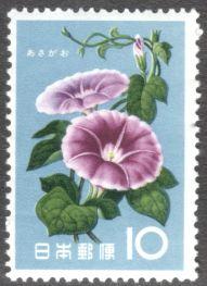Japan, flowers, Morning glory