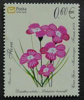 Montenegro, flora, Dianthus nitidus, 2008