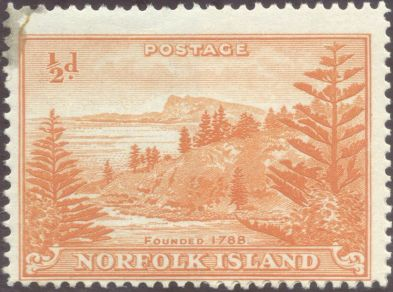 Norfolk Island - Araucaria heterophylla, Norfolk Island pine, their floral emblem