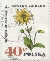 Poland - Arnica montana