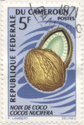 Cameroon - Cocos nucifera
