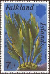 Falkland Islands - Durvillea species, seaweed