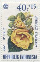 Indonesia - Hibiscus tiliaceus