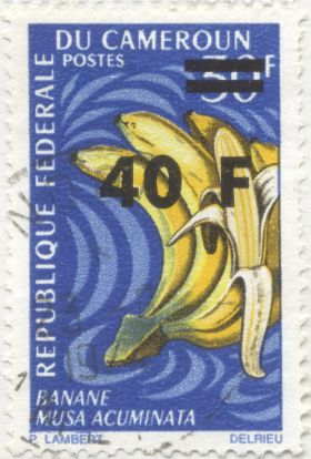 Cameroon - Musa acuminata