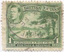 British Guyana - Oryza sativa, rice