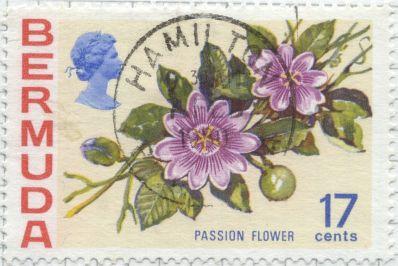 Bermuda - Passiflora species, Passionfruit