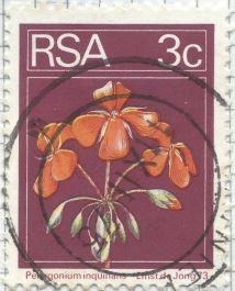 South Africa - Pelargonium inquinans