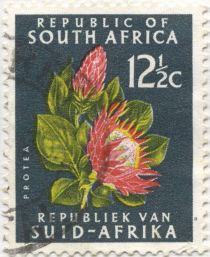 South Africa - Protea species