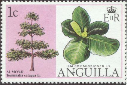 Anguilla - Terminalia catappa, Sea Almond