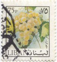 Lebanon - grape, Vitis vinifera