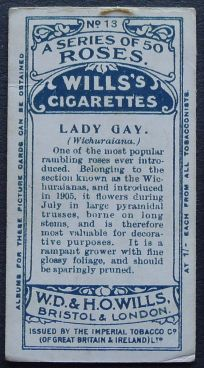 Rose, Lady Gay