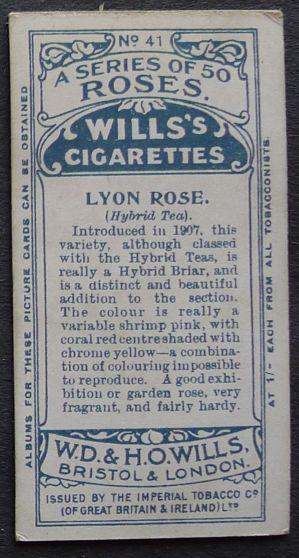 Rose, 'Lyon Rose'