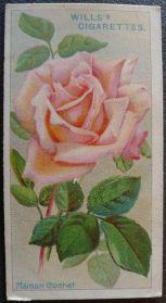 Rose, Maman Cochet, Tea Rose