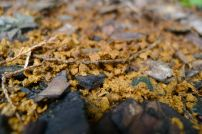 Stingless bee garbage dump