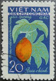 Kakrol or Gac, Momordica cochinchinensis