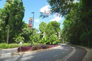 Gardened nature strips, Flecker Botanic Garden, Cairns