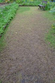 compaction of turf by heavy visitation