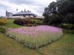 Good choice: Variegated Society Garlic, Royal Botanic Gardens, Sydney