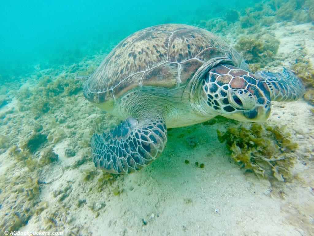Snorkeling à German Island