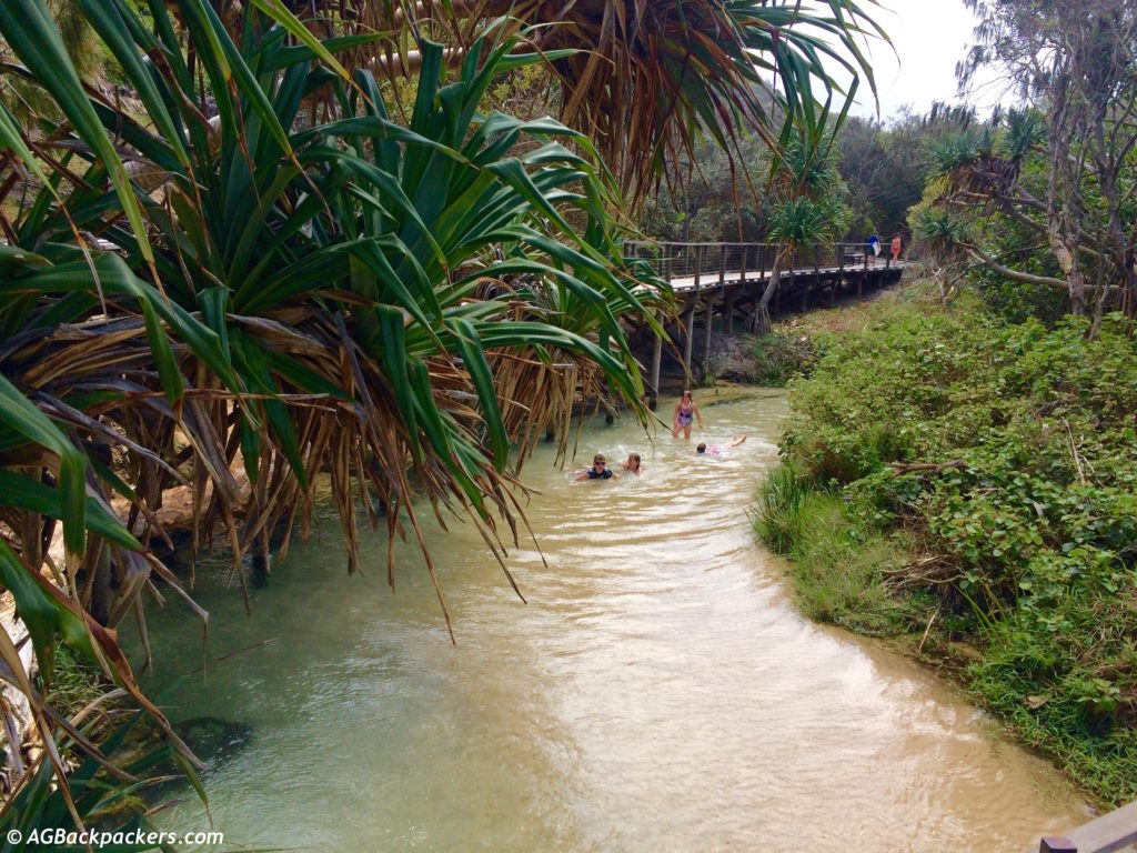 Eli Creek à Fraser Island Australie