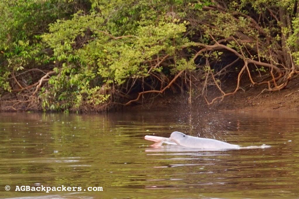 Nos protecteurs dans les eaux troubles d'Amazonie
