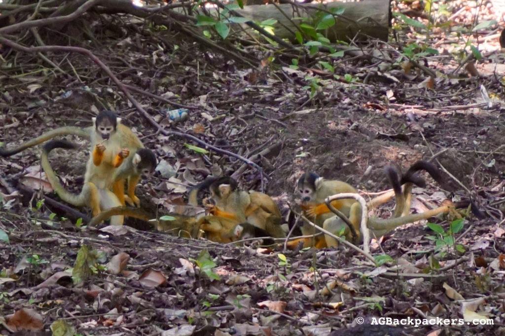 On partage notre lodge avec une colonies de singes