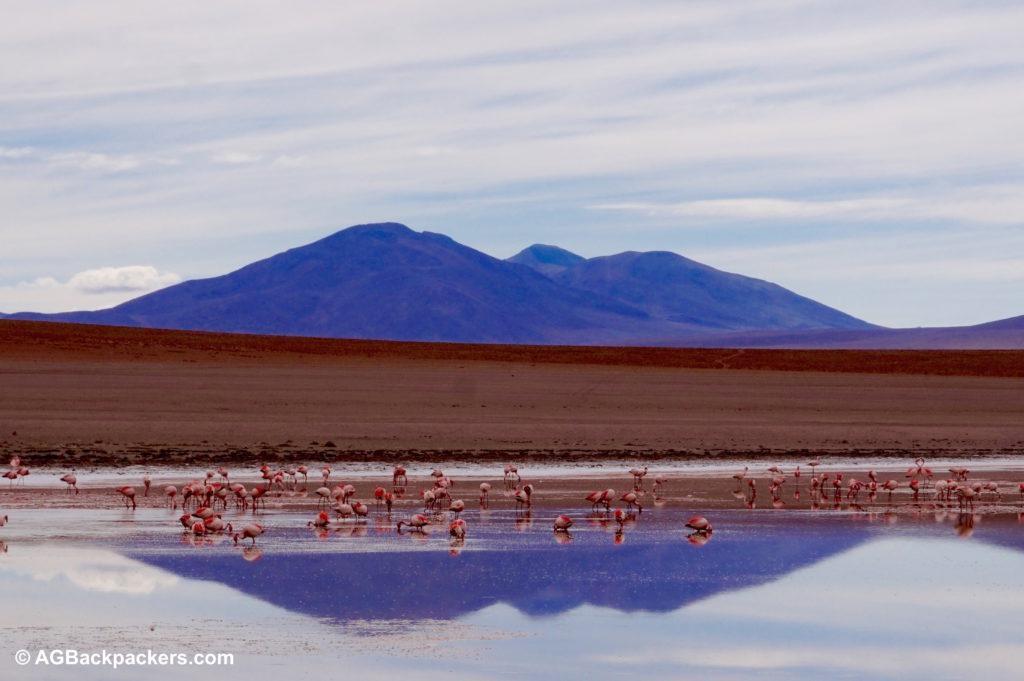 Laguna Sud Lipez Uyuni Bolivie