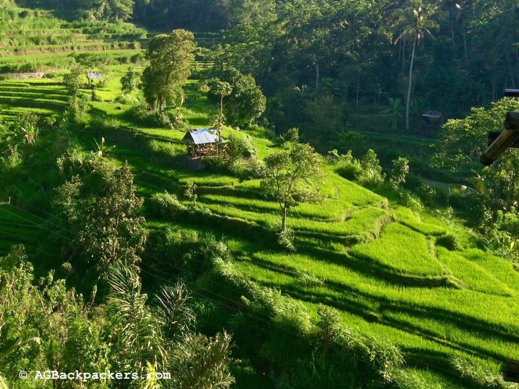 Rizières éternelles de Bali