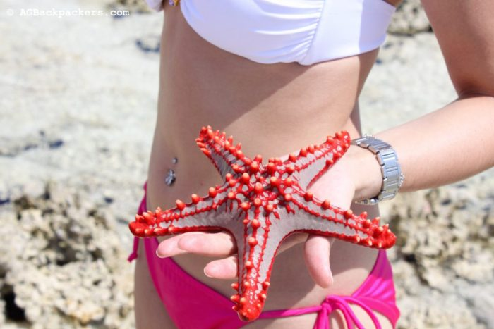 Star fishes are everywhere