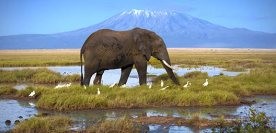 Reserves du Kilimandjaro Tanzanie