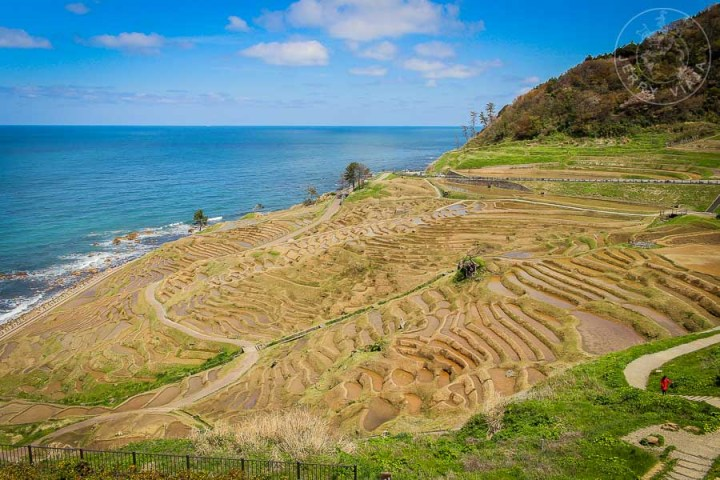 Terrazas de arroz Senmaida, Peninsula de Noto, Japon