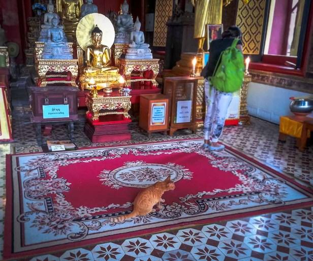 Gato, templo de Bangkok, Tailandia