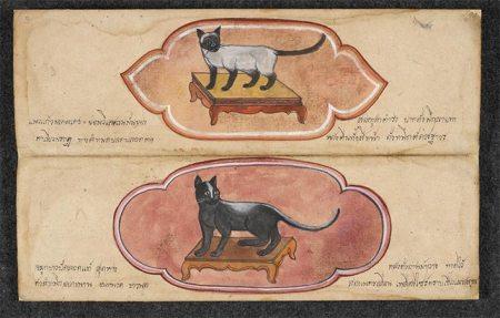 Gatos de Tailandia - Amuletos de la Suerte Ilustracion de gatos del manuscrito Cat treatise ตำราแมว