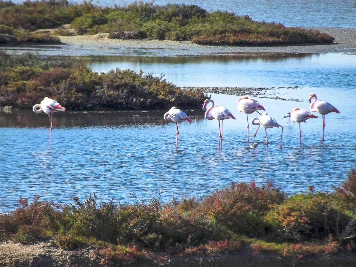 Flamencos en el Parque Natural y Parque Nacional de Doñana.