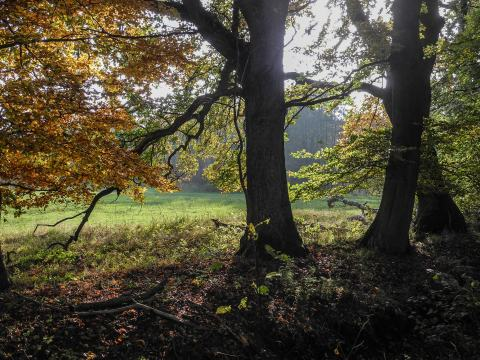 Im Brook (Quelle Wolfgang Haupt)