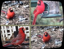 pretty red boys