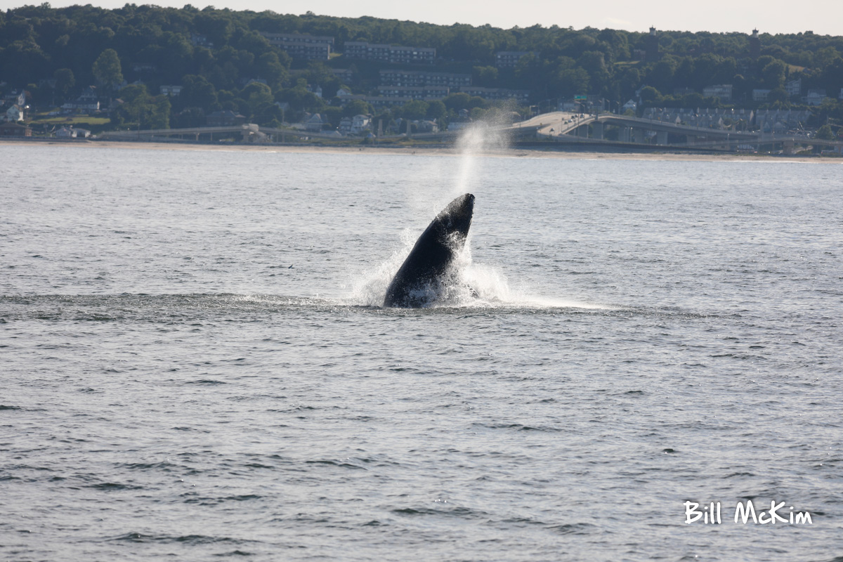 belmar marina jersey shore whale watching tour bill mckim