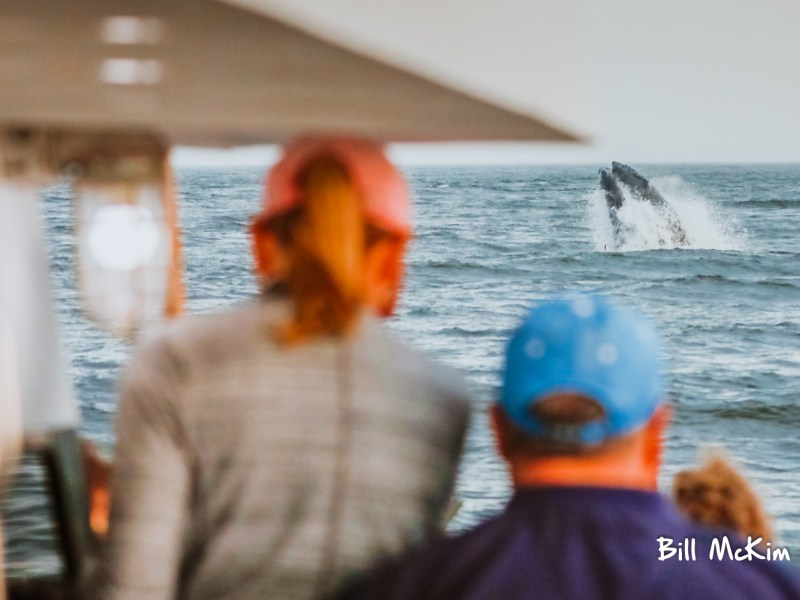 , Great year of whale watching at the Jersey shore, Jersey Shore Whale Watch Tour 2020 Season